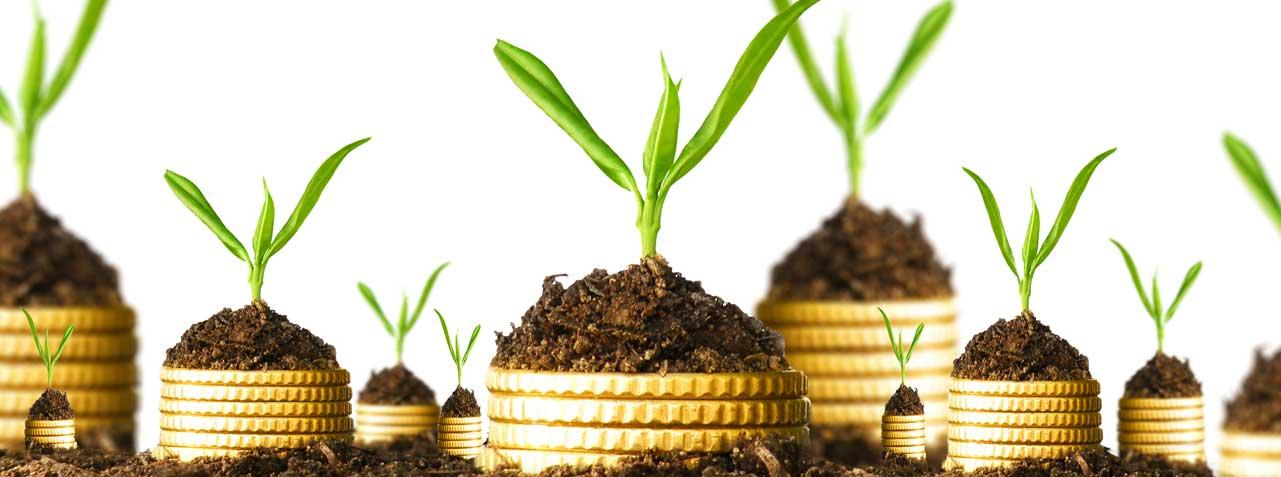 economic gardening startup washington